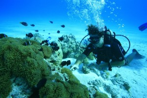 Bora Bora diving