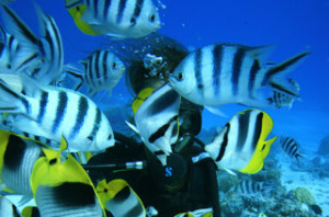 Diving Bora Bora