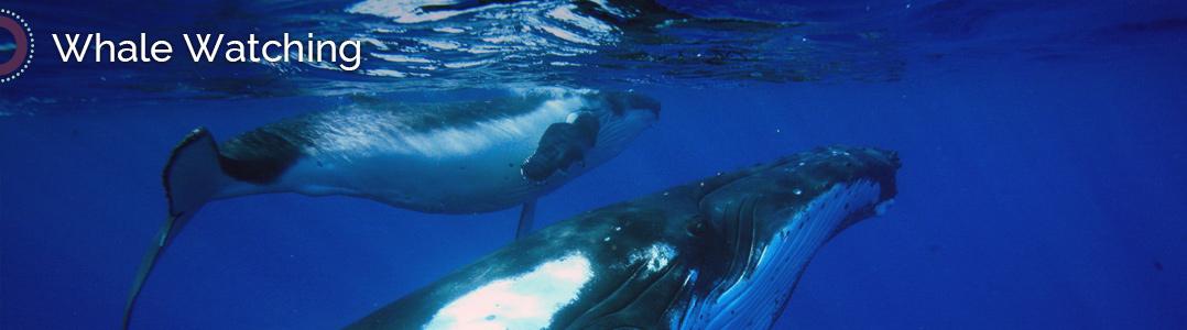 Tohora Whale Watching Tours Bora Bora